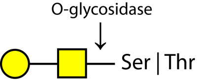 Ludger O-glycosidase enzyme structure