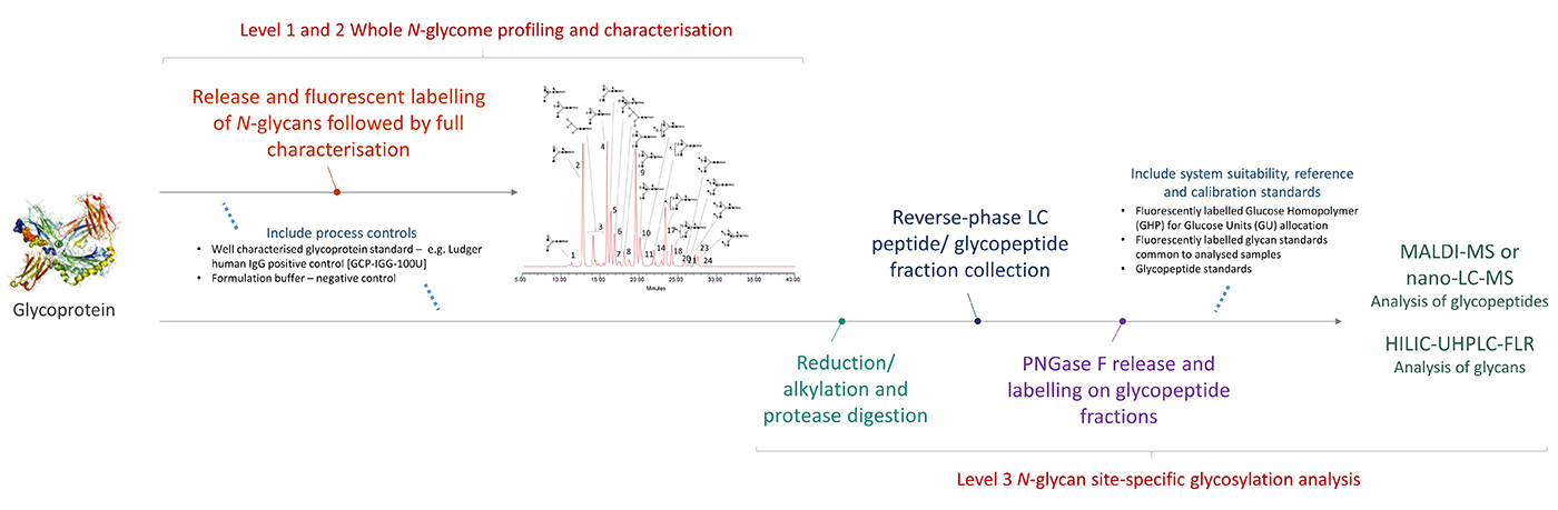 Ludger - Glycan Analysis - Workflow for Level 3 N-glycan Site-Specific Glycosylation Analysis