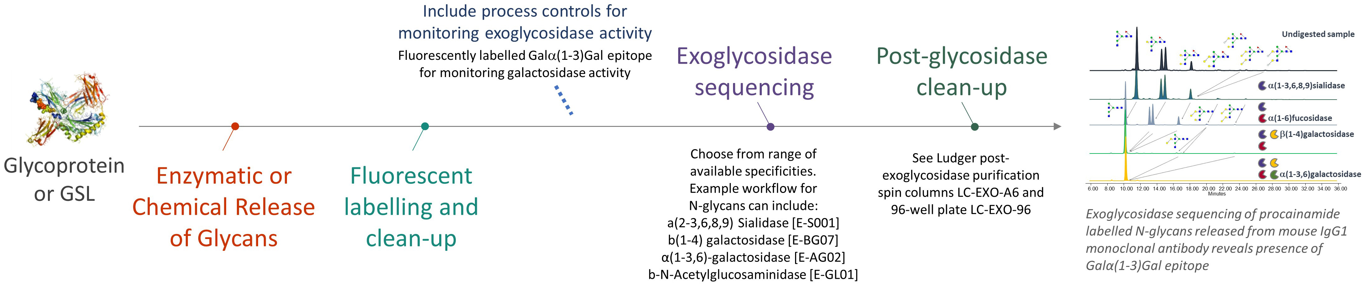Ludger Exoglycosidase Sequencing Workflow